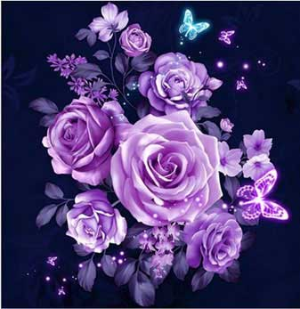 lila rosor