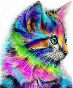 färgglada katt