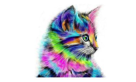Vecka 11 – Färgglada katt