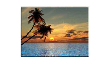 Vecka 31 – Solnedgång
