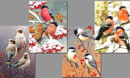 Vecka 42 – Småfåglar