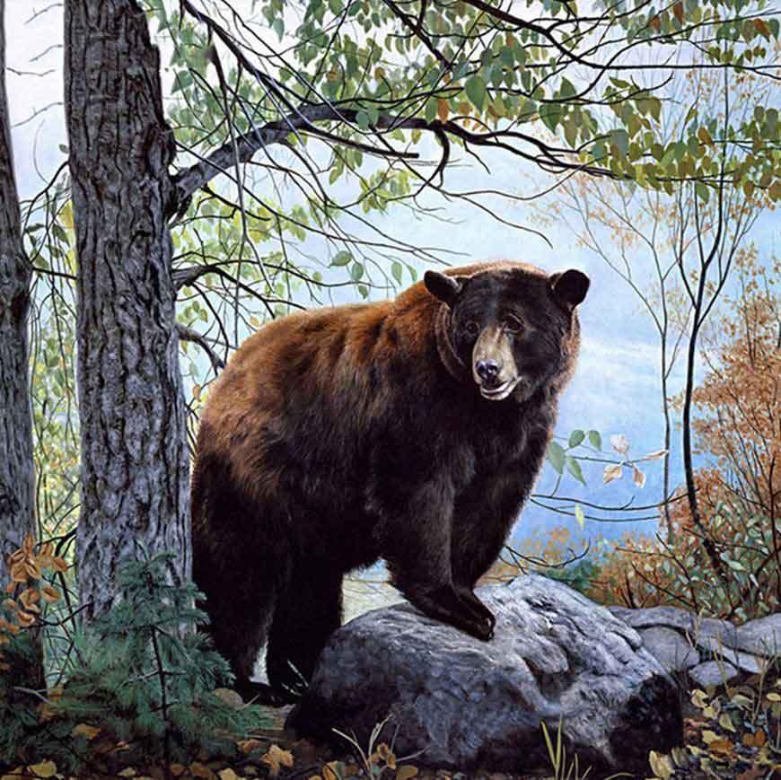 magnifik björn