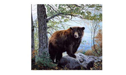Vecka 46 – Magnifik björn
