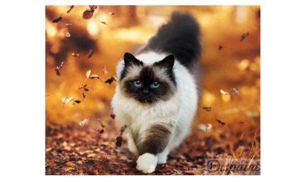 Vecka 43 – Katt bland höstlöv