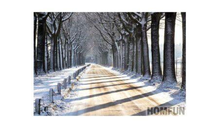 Vecka 53 – Snöig allé