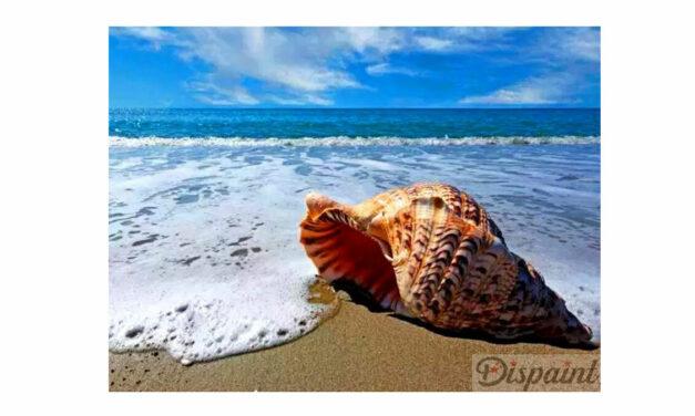 Vecka 29 – Snäckskal på stranden