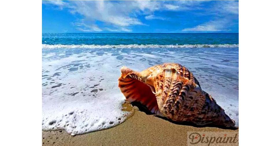 Snäckskal på stranden