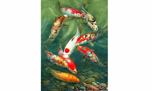 Vecka 38 – Koi fiskar